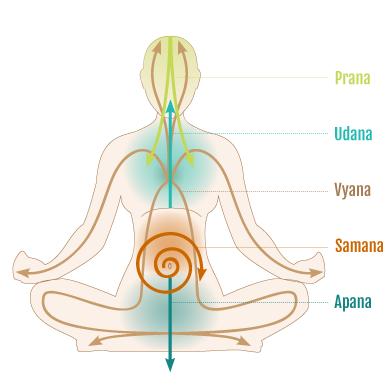 Vyana Vayu, situado en el corazón y pulmones y que gobierna y asiste al resto de vayús.